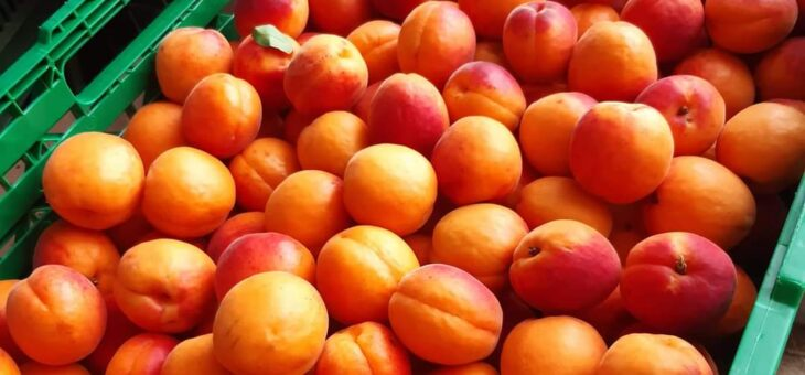Abricots du Valais